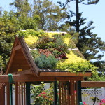 Amazing Idea Plant Succulents Wood Pallet And Secure The Roof