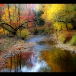Autumn Stream Calm Colors Fores Forest Trees
