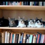Best Bookshelf Ever Cats Because That Such Shocker