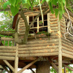 Best Tree House Ever Amazing Houses Which Are Memorable