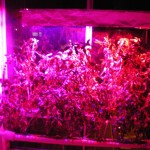 Building Your Own High Power Led Grow Lights For Hydroponics Science