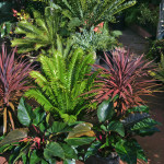 Colorful Tropical Plants Add Something Special The Garden