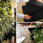 Create Indoor Living Wall Plants Bcliving