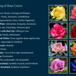 Design Leather Roses All Colors And Each Color Has Meaning