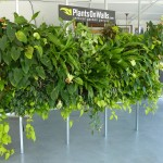 Floraframe Living Wall Kit Plantonwalls Showroom