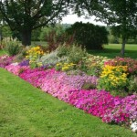 Flower Bed Ideas For Your Garden