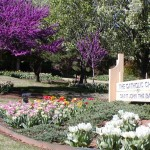 Flower Beds Serving Edmond Norman And Oklahoma City High