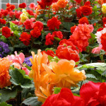 Flower Garden Ideas And Colorful Beautiful