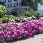 Flowers Commercial Flower Bed Designs