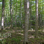 Forest Panorama Copyright Peter Pauer Keywords