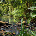 Forest Stream Panorama Flickr Sharing
