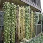 Free Plant Curtain The