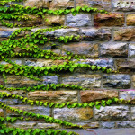 Free Vintage Stone Wall Series Page