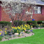 Front House Landscaping Ideas Light Garden