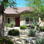Front Yard Tree Landscaping Ideas Cactus Plants Bloombety