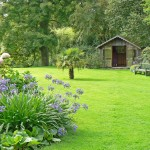 Garden Lawn Ideas And Hedge Care