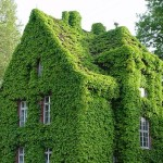 Gorgeous Green Walls The Next Big Thing Building Design