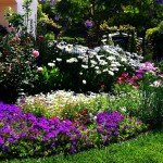 Grow Now Five Simple Steps Designing Beautiful Flower Beds