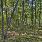 Hdr Forest Panorama Steve Digicams Forums