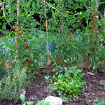 Here Are Some Helpful Home Farmer Tips That Will Help You Dig What