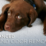 Household Odor Removal Image Search Results