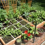 How Create Square Foot Garden Two Brothers Gardening