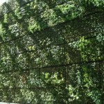 How Make Living Wall Outdoors