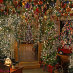 Hunting Christmas Trees Tales And Tails