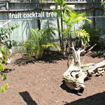Ideas For Your Small Garden Yardscape