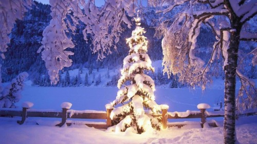 Information About Christmas Tree Outdoor Decorating