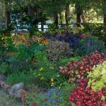 Landscape Plants Natural Stone Trees Perry Oklahoma