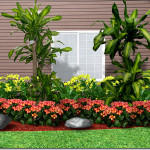 Landscaping Plant