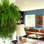 Learn How Make Your Own Living Wall Youtube