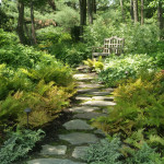 Natural Stone Pathway Lined Fern Leads