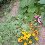 New Vegetable Garden Planning Your First