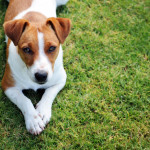 Removing Pet Odors From Your Home Quicken Loans Zing Blog