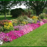 Seasonal Colors For Your Gardens And Flower Beds Drainage Irrigation