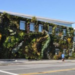 Semiahmoo Library Green Wall Largest Living North America