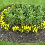 Simple Flower Bed Outside Front Ideas