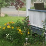 Small Flower Bed Daylilies Gardening