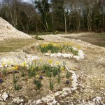 Small Island Flower Beds March Bloom