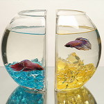 Striated Glass Fish Bowl Book Ends
