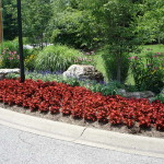 The Annual Flower Bed Designs