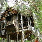 The Tree House Most Pristine Way Enjoy Nature Promoting Eco