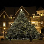 This The Outdoor Christmas Tree Banff Beautiful