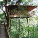 Tree House Hotels Four The Best Telegraph
