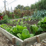 Vegetable Gardening Tips Easy Ideas For Great Produces