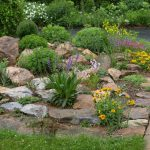 List Plants Grow The Main Rock Garden