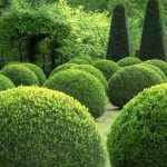 Buxus Sempervirens Box Topiary