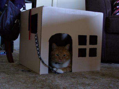 Cardboard Cat House Diy